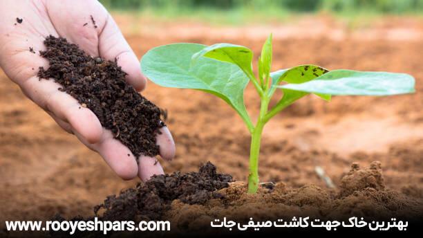 بهترین-خاک-جهت-کاشت-صیفی-جات