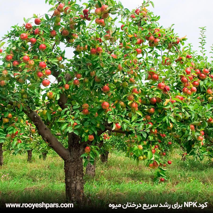 کود-NPK-برای-رشد-سریع-درختان-میوه