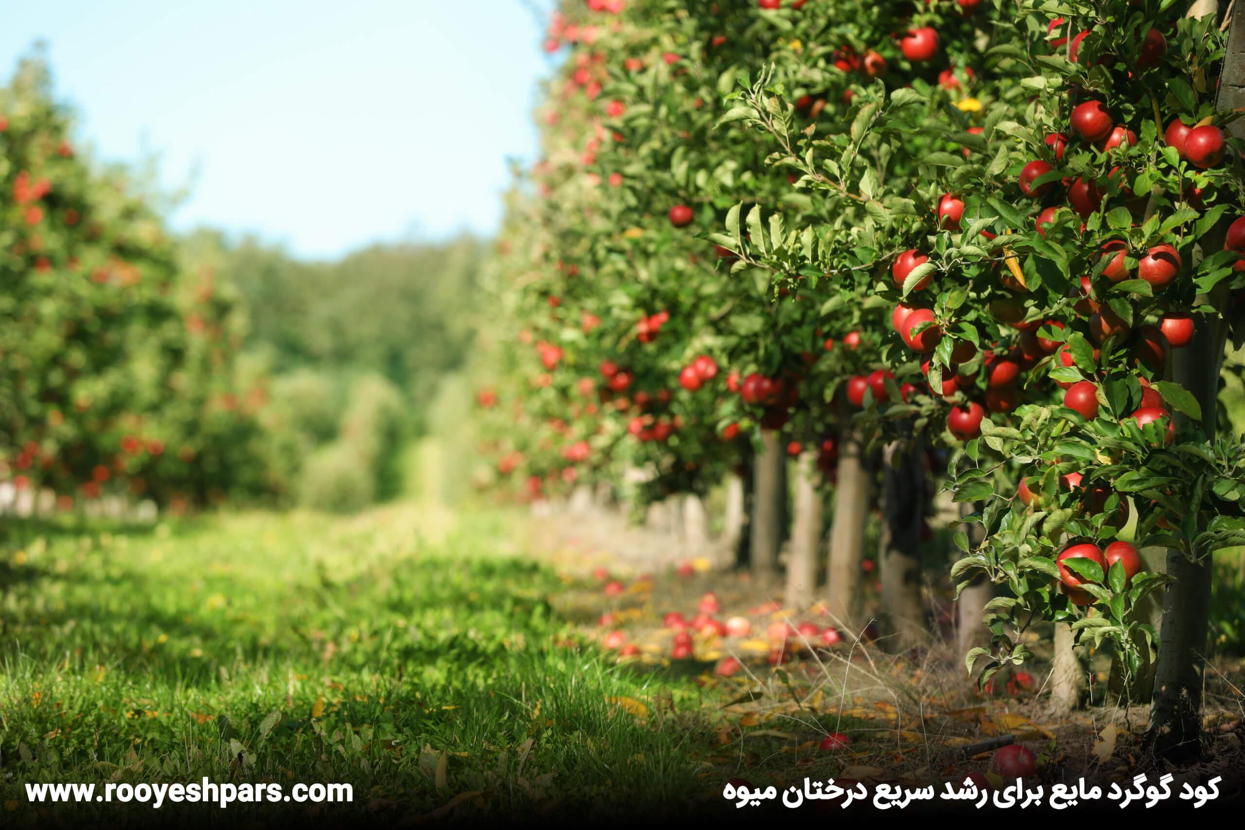 گوگرد-مایع-برای-رشد-سریع-درختان-میوه